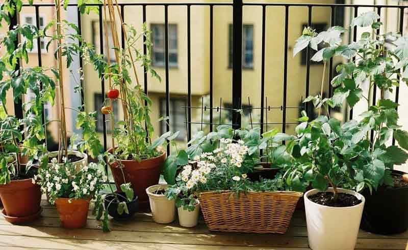 huerto urbano terraza balcón