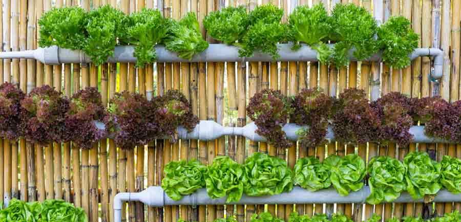 huerto urbano vertical lechugas