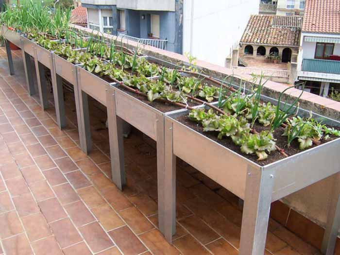 huerto urbano en terraza azotea