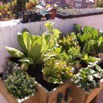 Mesa de cultivo huerto urbano en terraza