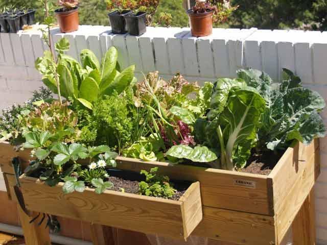mesa cultivo huerto urbano