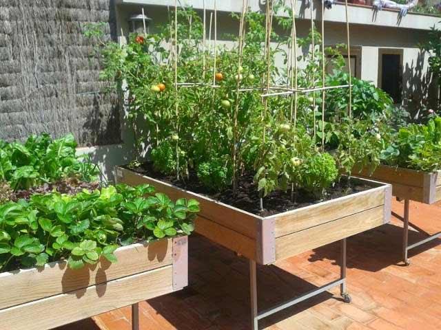 Mesa huerto urbano cultivo tomateras