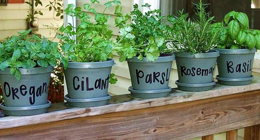 Huerto con plantas aromáticas