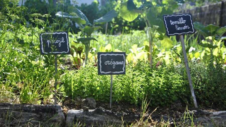Huerto plantas aromaticas en jardin