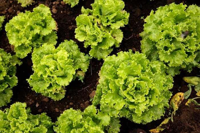 ¿Que plantar en un huerto urbano? Los cultivos mas sencillos