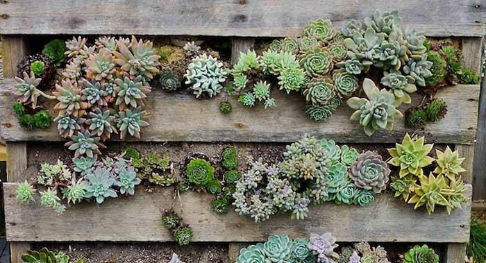 Palet jardin vertical terraza