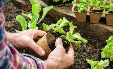 cultivos de huerto