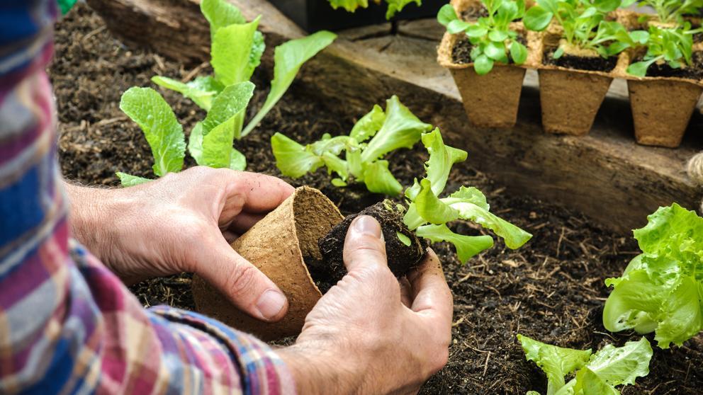 Los Cultivos del huerto
