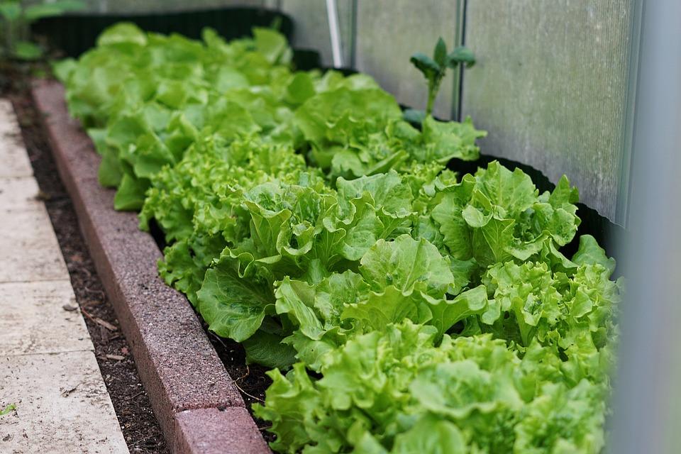 El invernadero calefactado protege los semilleros