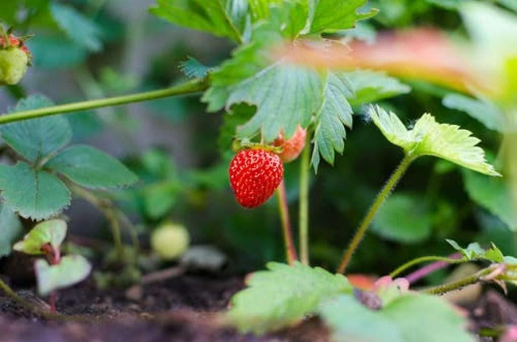 Marzo mes ideal para el cultivo