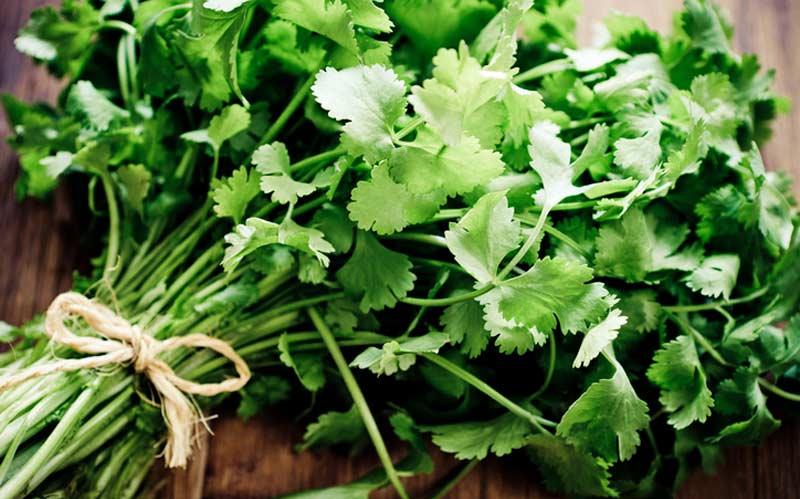 Trucos cultivo cilantro