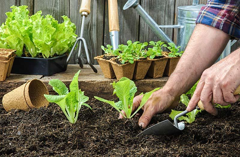 Planificacion cultivos huerto