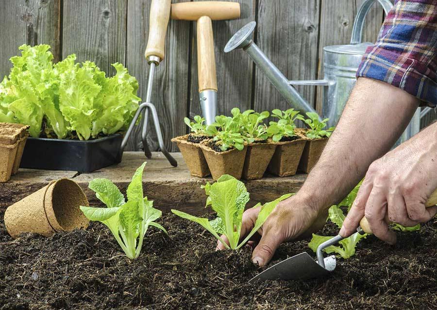Que plantar en abril en el huerto