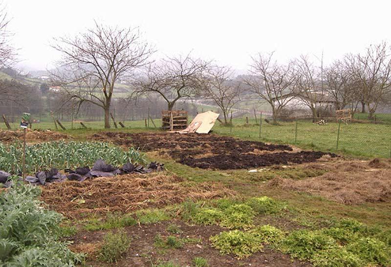 Que plantar en Enero. El Huerto en Enero