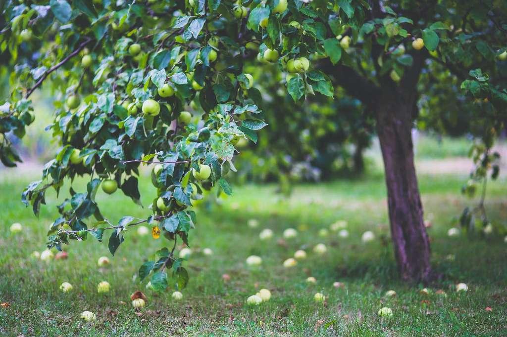 Cuidado frutales en julio