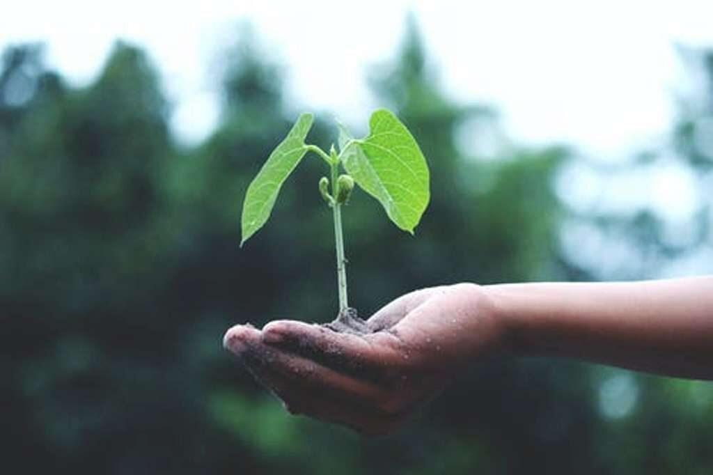 que plantar o transplantar en septiembre