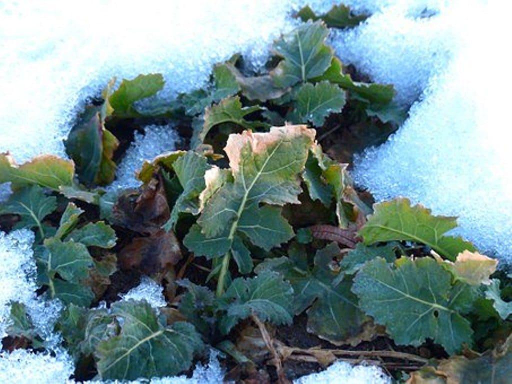 Verduras y hortalizas que se pueden cultivar en diciembre
