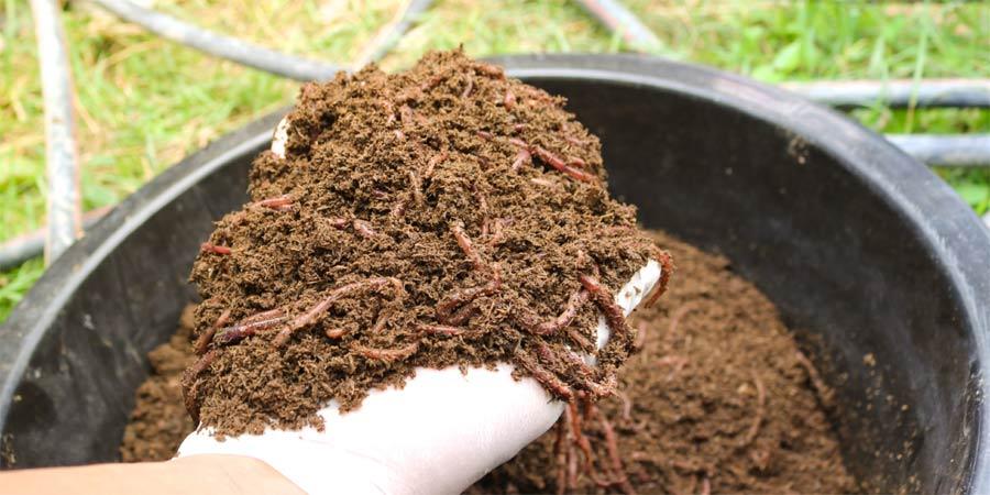 Cómo hacer Humus de Lombriz. El mejor abono orgánico