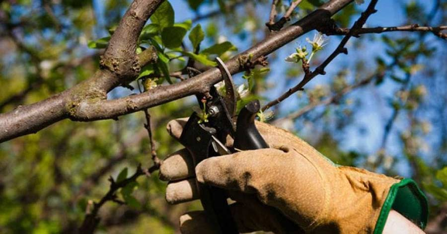 Cómo podar un árbol: Consejos para la poda de árboles