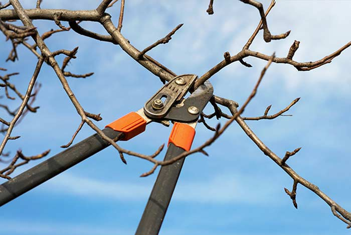 Consejos para la poda de árboles