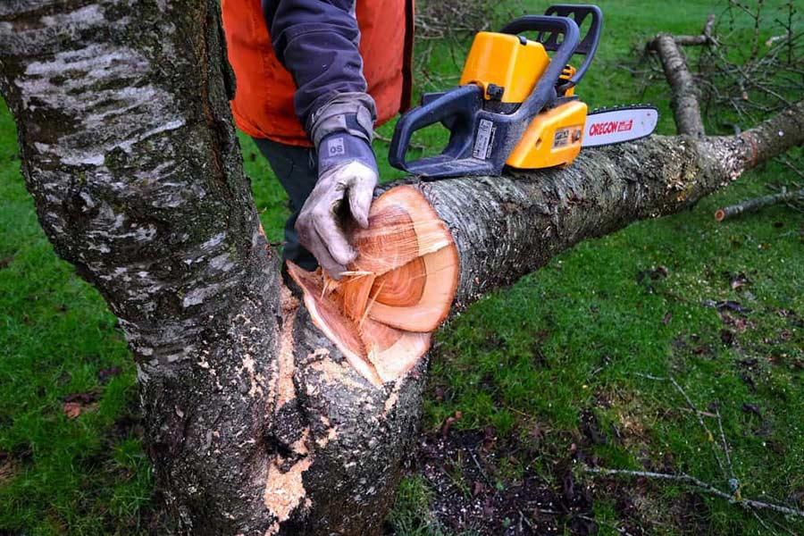 Cómo talar un árbol con motosierra