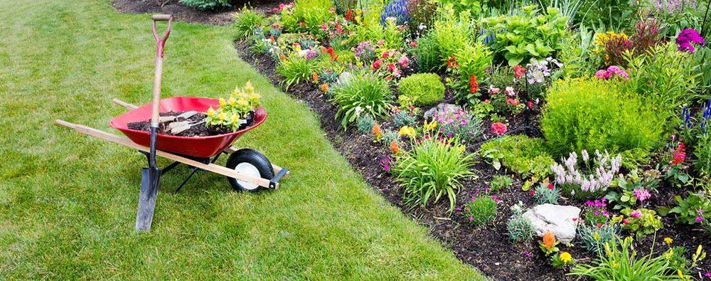 Muy Jardin: Los mejores productos de Jardinería