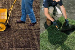 Césped en tepe o en semilla, ¿Qué es mejor?