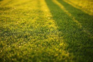 Cómo plantar césped: Consejos para la siembra del césped