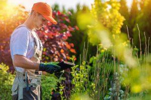 7 Consejos para Diseño de jardines