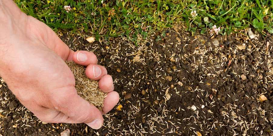 Como plantar césped con semillas