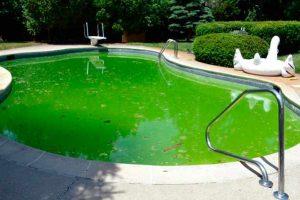 Cómo limpiar una piscina verde
